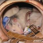 Slapen bij ome Sari